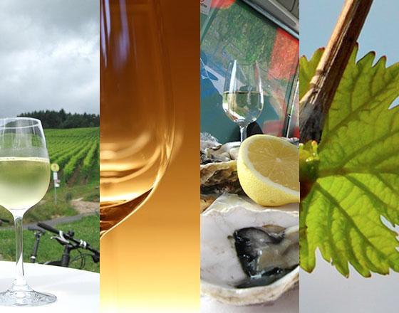 caratteristiche vini sulie